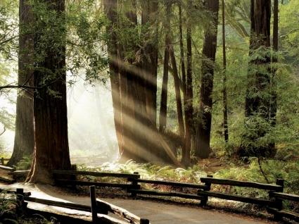 Muir Woods Wallpaper California World
