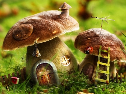 Mushrooms House Wallpaper Photo Manipulated Nature