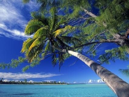 Palm Tree Society Island Beach