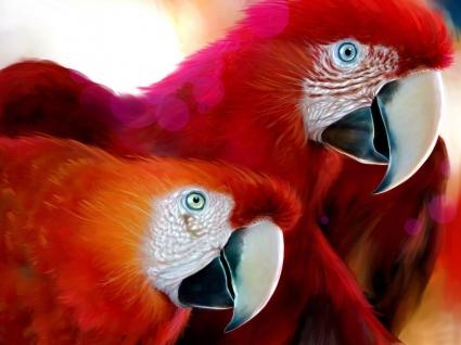Parrots drawing Wallpaper Parrots Animals