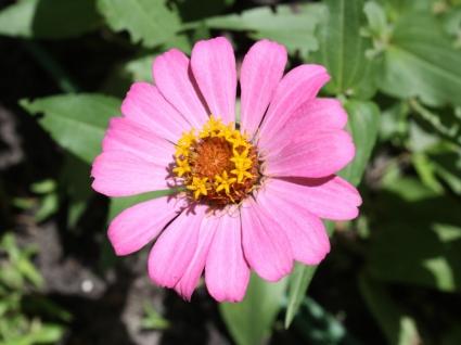 Pink Flower macro Wallpaper Flowers Nature
