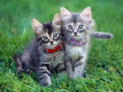 Play Time Wallpaper Cats Animals