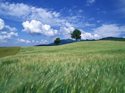 Quiet Fields Wallpaper Landscape Nature