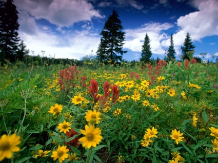 Rabbit Ears Pass Wallpaper Landscape Nature