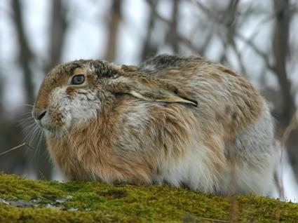 Rabbit Wallpaper Other Animals
