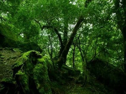 Rainforest Moss Wallpaper Other Nature