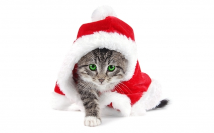 Santa Cat