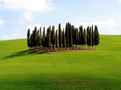 Scenic Siena Province Wallpaper Italy World