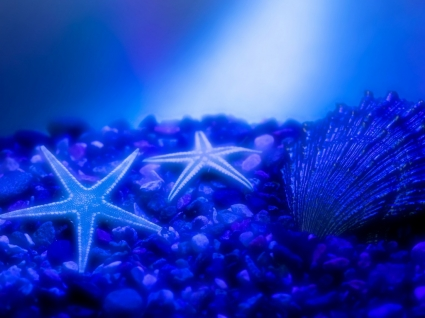 Sea Stars Wallpaper Other Nature