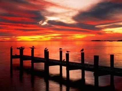 Seagulls at Sunset Florida