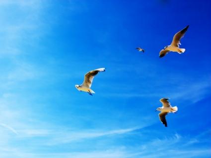 Seagulls Wallpaper Birds Animals