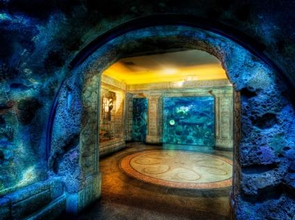 Shark Reef Aquarium Wallpaper United States World