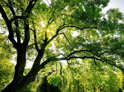 Shining Wallpaper Landscape Nature
