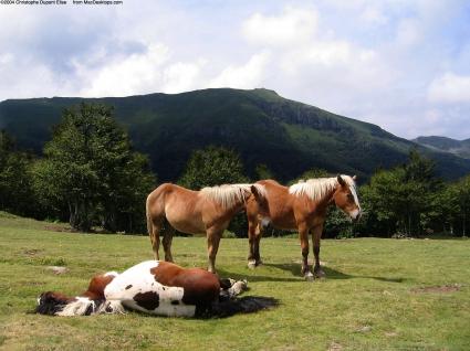 Sleeping Horse