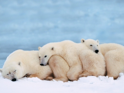 Slumber Party Wallpaper Bears Animals