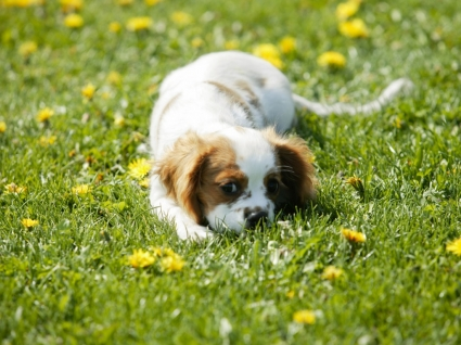 Small Dog Wallpaper Dogs Animals