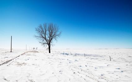 Snow Road Tree