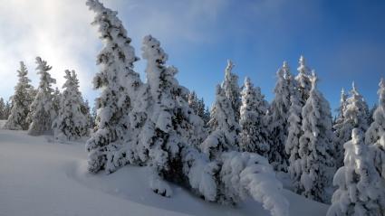 Snow Trees  HDTV 1080p