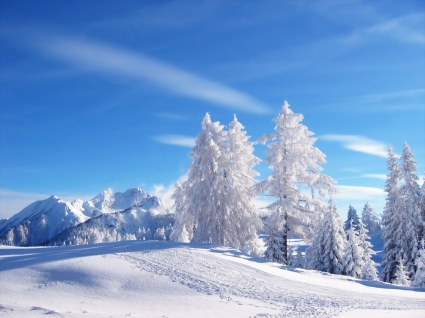 Snow Wallpaper Winter Nature