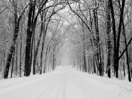 Snowy Road Wallpaper Winter Nature