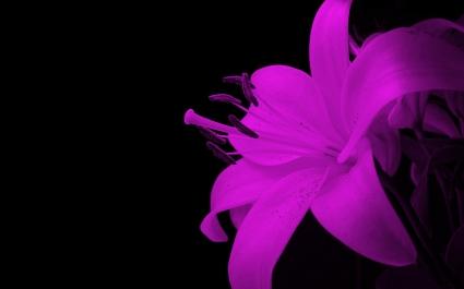 Spectacualr Flower
