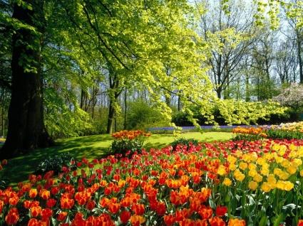 Spring Park Wallpaper Spring Nature