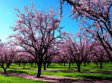 Spring Wallpaper Spring Nature