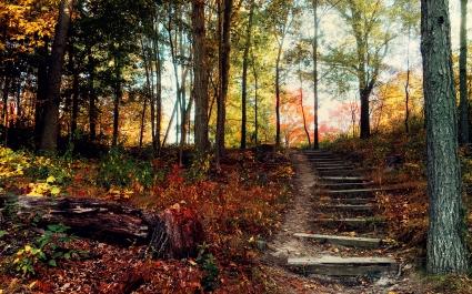 Steps Deep Forest
