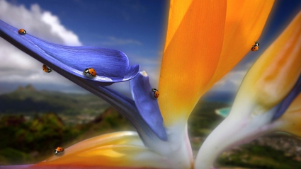 Strange Variety Flower