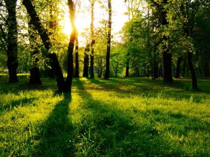 Sun Between Trees Wallpaper Landscape Nature