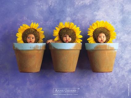Sun Flower Babies
