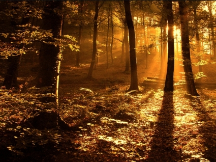 Sun ray in the woods Wallpaper Landscape Nature