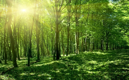 Sun Spring Green Forest