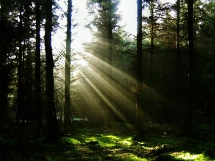 Sun Through The Trees Wallpaper Landscape Nature