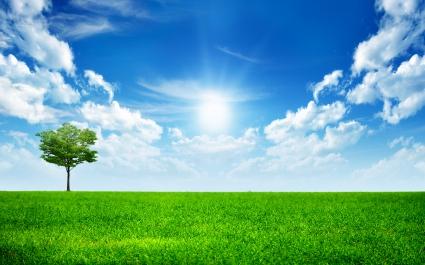 Sunny Bright Day