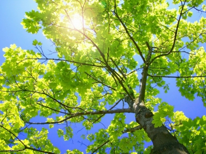 Sunny Tree Branches Wallpaper Plants Nature