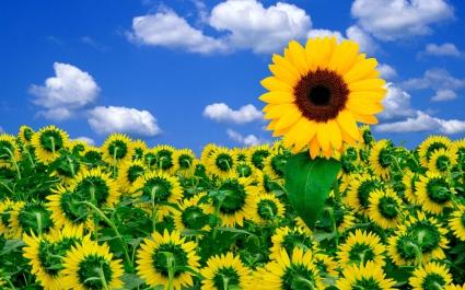 Sunshine to Brighten Your Day