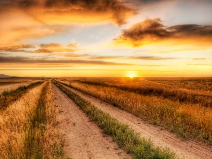 The Lonely Road Wallpaper Landscape Nature