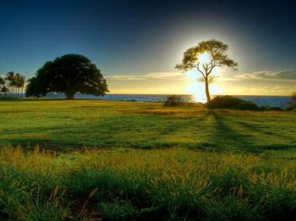 Tree of Light Wallpaper Landscape Nature
