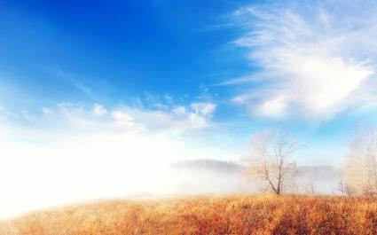 Trees Cloud Fog Landscape