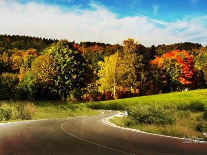Trees Retreat Wallpaper Landscape Nature