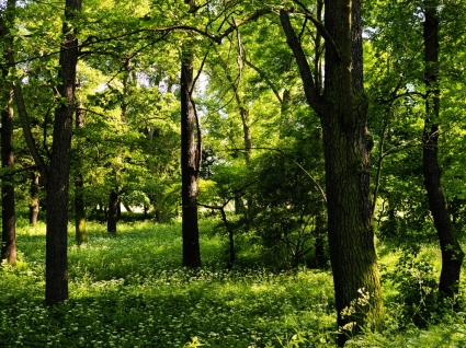 Trees Wallpaper Plants Nature