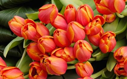 Tulip Flowers Arrangement