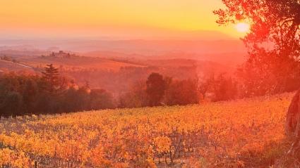 Vineyard Sunset Siena Tuscany Italy