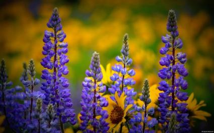 Washington Wildflowers