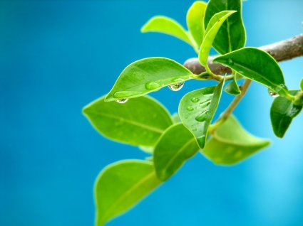Water on leafs Wallpaper Plants Nature