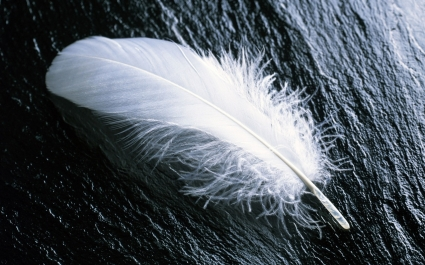 White Feather Wallpaper Landscape Nature