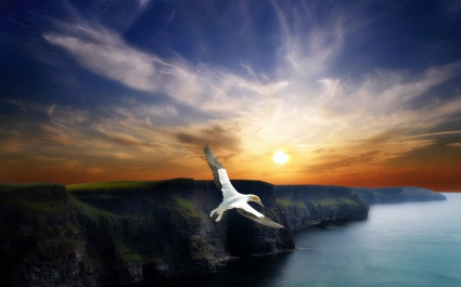 Wing Flight