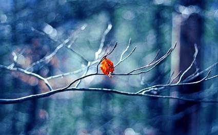 Winter Tree Leaf