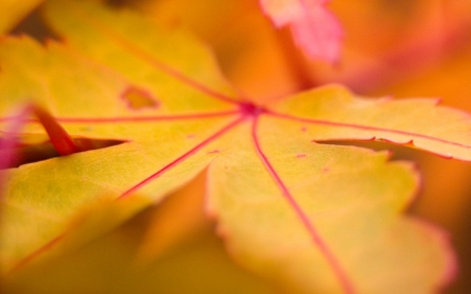 Yellow Leaf Wallpaper Landscape Nature